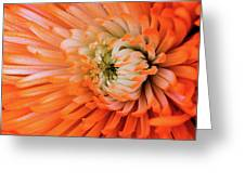 Chrysanthemum Serenity Greeting Card