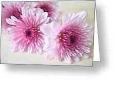 Chrysanthemums #009 Greeting Card