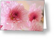 Chrysanthemums #011 Greeting Card