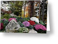 Chrysanthemums In The Garden Greeting Card
