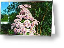 Chrysanths Greeting Card
