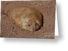 Chubby Prairie Dog Resting In A Shallow Hole Greeting Card