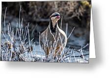 Chukar Greeting Card