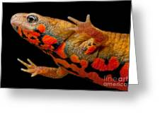Chuxiong Fire Belly Newt Greeting Card