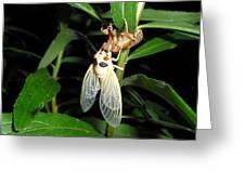 Cicada Greeting Card