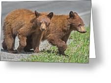 Cinnamon Cubs Greeting Card