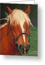 Cinnamon The Horse Greeting Card
