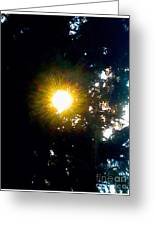 Circle Of Sunglow Through Pine Greeting Card