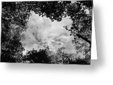 Circling Overhead Greeting Card