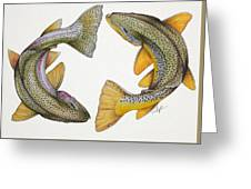 Circling Rainbow And Brown Trout Greeting Card