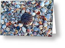 Circluar Shell In Watercolor Greeting Card