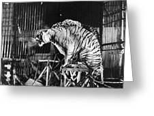 Circus: Tigers Greeting Card