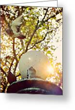 City Doves Greeting Card by JAMART Photography