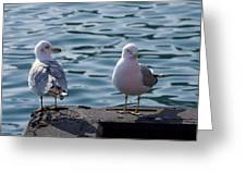 City Gulls Greeting Card