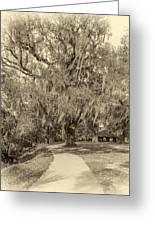 City Park New Orleans - Sepia Greeting Card