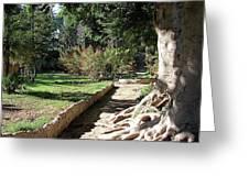 City Park Rhodes Greece Greeting Card