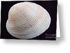 Clam Shell Greeting Card