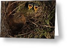 Clamorous Chicks Greeting Card