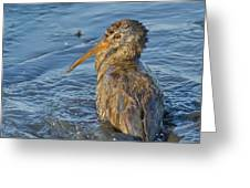 Clapper Rail Greeting Card