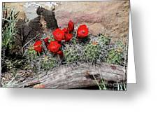 Claret Cup Cactus And Sandstone Greeting Card