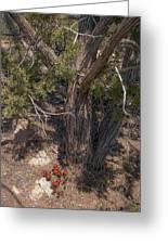 Claret Cup Cactus #2 Greeting Card