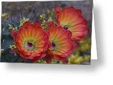 Claret Cup Cactus - Three Of A Kind  Greeting Card