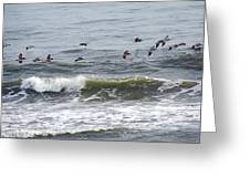 Classic Brown Pelicans Greeting Card