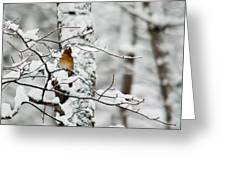 Classic Cardinal In Snow Greeting Card