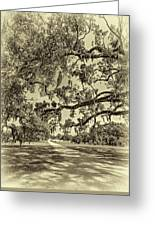 Classic Southern Beauty - Evergreen Plantation -sepia Greeting Card