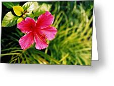 Classical Style Greeting Card