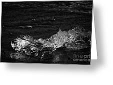 clear ice washing up on the black sand beach at Jokulsarlon Iceland Greeting Card