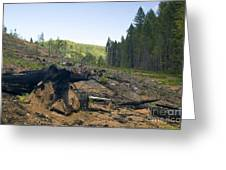 Clearcut Logging Site Greeting Card