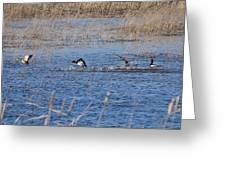 Cleared For Takeoff-ring-necked Ducks  Greeting Card