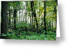 Clearing Glimpsed 2 Greeting Card