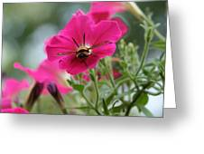 Clearwing Hummingbird Moth At Work In Patch Of Petunias Greeting Card