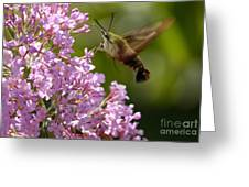 Clearwing Pink Greeting Card