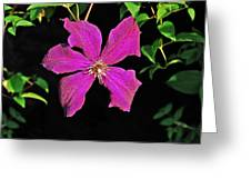 Clematis 2598 Greeting Card