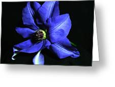 Clematis 3 Greeting Card