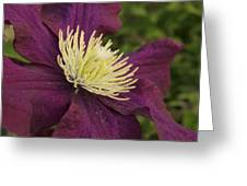 Clematis 4000 Greeting Card