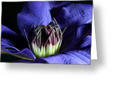 Clematis 5 Greeting Card