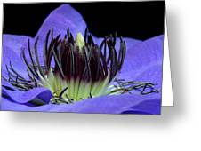 Clematis 8 Greeting Card