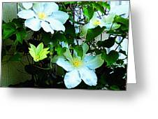 Clematis Again Greeting Card