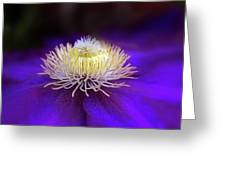 Clematis Aglow Greeting Card