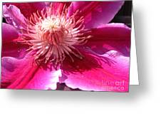 Clematis Bloom.. Greeting Card