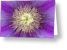 Clematis Greeting Card by Christopher Gruver