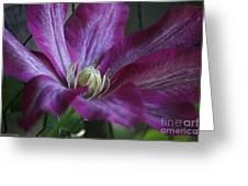 Clematis Close-up Greeting Card