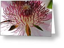 Clematis Detail Greeting Card