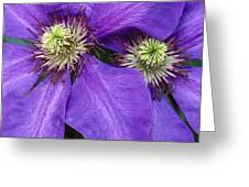 Clematis Detail Greeting Card