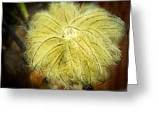 Clematis Flower Head In Fall Greeting Card