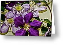 Purple Clematis Flower Vines Greeting Card